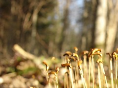 newbies (miradel) Tags: life lighting new wood trip morning light wild plant nature beautiful beauty forest moments natural little walk joy earlymorning fresh na thoughts simplicity moment simple mira exciting budy  advenure puszcza sioo bialowieska
