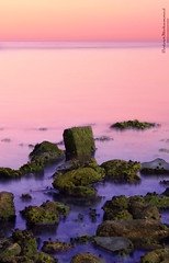 (  || Bodour ) Tags: life pink b red sea black green stone photo photographer slow purple mohammed shutter fl algae jeddah mohammad mohamed   mohamad         budor     bdour  bodour