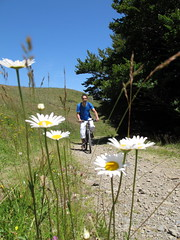 (LILI 296...) Tags: france flower fleur bike marguerite bicyclette chemin vtt pyrénées canonpowershotg12
