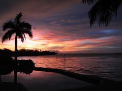 Palms at Sundown (TedT95) Tags: trees sunset orange usa sun gulfofmexico pool yellow night marina palms tampa island fire gold bay day gulf sundown florida flames palmtrees bayside flaming fireball biminibay