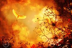 Freedom (Laurence L.T.) Tags: brazil orange birds brasil zoo laranja pssaro vol oiseau goinia garas brsil gois voo zoogyn