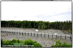 Mangrove forest Chonburi tour by naturenote_E12461014-002