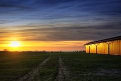 Goldacker (dubdream) Tags: ocean sunset sea sky cloud water field landscape spring balticsea agriculture contrails schleswigholstein holstein acker heiligenhafen colorimage dubdream olympusem1