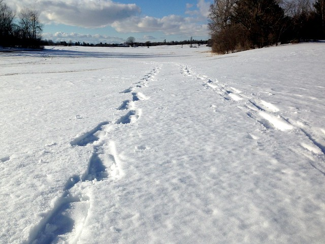 Snow Shoe Tracks Away