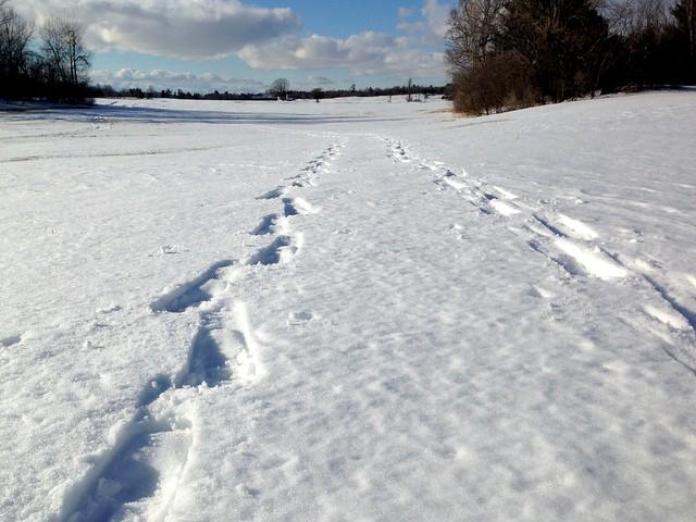 Snow Shoe Tracks Away