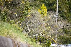 20140412-_DSC3819 (Fomal Haut) Tags: flower green spring nikon hana           nikond4  mineoka