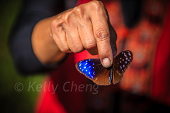 Taiwan-121113-223 (Kelly Cheng) Tags: travel red color colour tourism nature animals horizontal fauna butterfly daylight colorful asia day taiwan vivid colourful traveldestinations  northeastasia
