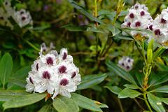 Mai Botanik - 2016-0012_Web (berni.radke) Tags: may growth mai botany botanicalgarden mnster botanik botanischergarten wachstum