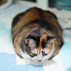 E Meow's life (Steve only) Tags: auto cats color reflex f14 sony 55mm m42 porst 5514 mitakon 11455mm e nex3 lensturbo