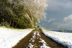 Look! They are coming. (balu51) Tags: road morning blue dog white tree green clouds grey spring felder meadow himmel wolken grau hund walker april 60mm grn blau sonnig weiss morgen lowclouds feldweg frhling wolkig 2016 morgenspaziergang waldrand wintereinbruch spaziergnger tiefhngend copyrightbybalu51