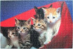 Junge Hauskatzen / Young Domestic Cats (Leonisha) Tags: cat chat kittens puzzle katze jigsawpuzzle ktzchen