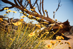 IMG_5158 (Lastexit) Tags: california desert joshuatree yuccavalley