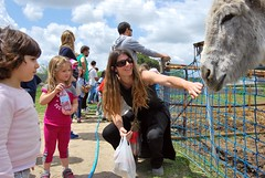 LAS CHICAS (ovejas) Tags: family famille friends naturaleza amigos love amor donkeys country amour amics amistad burritos