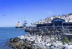 Puerto de San Antonio (Cristobal Merino Fotografa) Tags: playa puerto puertos gaviotas lobo marino lobomarino pelicano mar agua barco beach