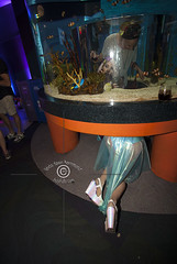 AQUEERium20160626_117sm (DawnOne) Tags: gay party fish toronto men water glitter aquarium rainbow women dj ray tube australian young ripleys kitty pride lgbt mermaids virago sharks local rays judy trans mermaid facepaint superstar tanks transsexual sapphire reign 2016 transsexuals cownose lgbtq titha aqueerium