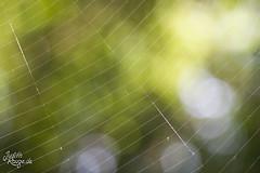 Abstract Nature (judithrouge) Tags: abstract green lines bokeh natur spiderweb bubbles depthoffield grün abstrakt spinnenweben linien unschärfe lichtpunkte