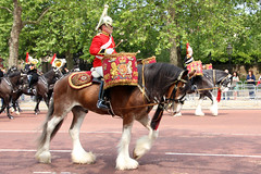 Drum Horse Adamas & Mercury (NTG's pictures) Tags: drum horse adamas the major generals review rehearsal for trooping colour british army household division mounted band blues royals cavalry lifeguards life guards mercury