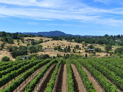 Awesomeness (Kazooze) Tags: landscape winery vineyards mountain hills bluesky nature outdoor