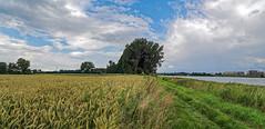 Dormagen-Rheinfeld / Rheinwiesen Nhe Landhaus Piwipp (KL57Foto) Tags: june juni pen germany deutschland olympus nrw landschaft nordrheinwestfalen rheinland rhineland dormagen rheinfeld 2016 landgasthaus rheinlandschaft piwipp epm2 kl57foto