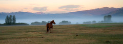 'SPOOKS' on a misty morning (laura's POV) Tags: ranch morning trees sky horse mist mountains west nature beautiful beauty field grass fog clouds sunrise landscape dawn mare peace farm meadow peaceful calm jackson hills pasture western wyoming jacksonhole bucolic oldwest yearling spooks lauraspointofview lauraspov sonya7rii