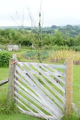 Touring Melissa's plot - the veg garden gate (Permaculture Association) Tags: wales cymru gathering ecovillage permaculture 2016 lammas paramaethu