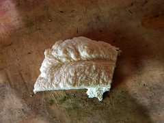 Platos y recetas italianas (The Italian Side) Tags: slowfood casadecampo santahelena comidavegetariana pastacasera theitalianside comidaitalianamedellin