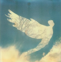 resurrection (iam.ina) Tags: blue sky tree art film angel clouds analog vintage polaroid sx70 photography flying doubleexposure beta pola symbole resurrection quadratisch polaroidsx70 analoge panpola impossibleproject theimpossibleproject sofortbildfilm inaechternach betafilm px70colorshade thetangibleproject tangibleprojekt
