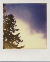 px680_test_night trees (daveotuttle) Tags: polaroid sx70 testfilm impossibleproject px680