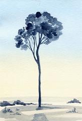 albero 42