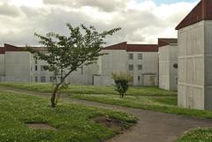 Barham Park Estate, Sudbury, London (J@ck!) Tags: tree london landscape condemned empty sudbury desolate councilestate lowrise socialhousing londonboroughofbrent ha0 barhamparkestate resiform