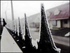 24. Palabras como púas congeladas (Por Jose y Jonathan) Tags: chile winter cold hiver invierno polar frío spikes ola coldness región talca púas séptima