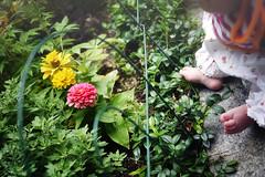 gardening toes (Nachosan) Tags: flowers summer baby feet girl garden sweet mai bebe 3months chidhood