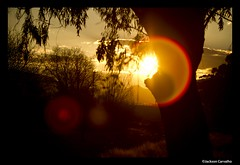 On the Road - across Africa (Jackson Carvalho) Tags: life africa wild elephant sol animal animals sunrise notebook mammal 5 south selva lion vida tenis zebra celular avestruz impala floresta sul leo elefante bigfive entardecer iphone selvagem cervo javali marfim