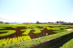 IMG_3487.JPG (tarodepon) Tags: japan aomoriprefecture eyefi inakadate