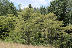 West Virginia 6-12-547 (Cwrazydog) Tags: thomas stewart westvirginia davis parsons blackwaterfalls elkins grafton philippi belington morantown