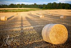 Focal Point (Pixelda) Tags: summer barley straw grains agriculture bales stalks arable pixelda