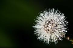 Seed (peeandcat) Tags: nikon flash seeds micro nikkor f28 orbis 105mm d5100
