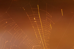 Broken Web (sbisson) Tags: light sunset orange strand gold spider web silk gossamer tattered spidersilk