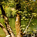 """By the river at Fractalize 2012 by Pheosa • <a style=""""font-size:0.8em;"""" href=""""http://www.flickr.com/photos/32644170@N08/7805208502/"""" target=""""_blank"""">View on Flickr</a>"""