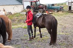 At Grf, saddling up the first morning (olikristinn) Tags: horses horse iceland riding 2012 snfellsnes breidavik snaefellsnes hestar icelandichorses hestafer breiavk grf august2012 15082012 grf2012