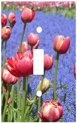Tulips and hyacinths single switchplate (Charlotte Clarke Geier) Tags: computer print crafts digitalart computercrafts
