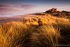 Bamburgh Castle ([[BIOSPHERE]]) Tags: sunset sea seascape castle beach landscape northumberland bamburgh marramgrass