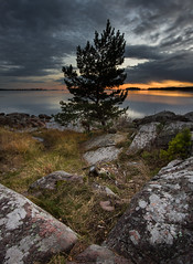 Lone tree - Skutberget (- David Olsson -) Tags: sunset lake tree fall nature water clouds landscape nikon october rocks sundown cloudy sweden dusk stones calm cliffs karlstad fx stomp vnern lonetree lonelytree 2012 vrmland 1635 drygrass orangeglow d600 1635mm lakescape lateautumn skutberget 2exposures lonesometree manualblend scenicsnotjustlandscapes manuallyblended davidolsson 1635vr