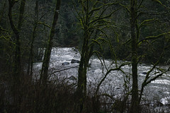 Dark Wooden II (zh3nya) Tags: trees nature forest river flow outdoors woods gloomy hiking eerie rapids pacificnorthwest wa washingtonstate pnw darkforest snoqualmieriver twinfallstrail 35mmf18g d3100