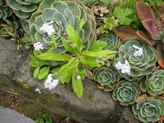 Photox - Alan Dye garden IMG_0086