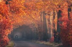 Осенний пейзаж, Польша