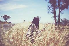 Summertime Sadness (Amanda Mabel) Tags: summer selfportrait wheatfield amandamabel summertimesadness