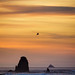 Seagull Sunset Silhouette II