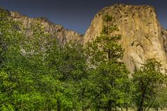 Commander (moises_delgado) Tags: california travel fauna flora hiking wildlife trails yosemite elcapitan usnationalpark sierrranevadamountains