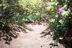 One fine day (Yuta Ohashi LTX) Tags: shadow flower japan japanese nikon f14 voigtlander sl d750  fixed 58mm nokton kawasaki  focal primelens 5814